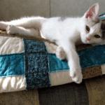 Bella's Quilt