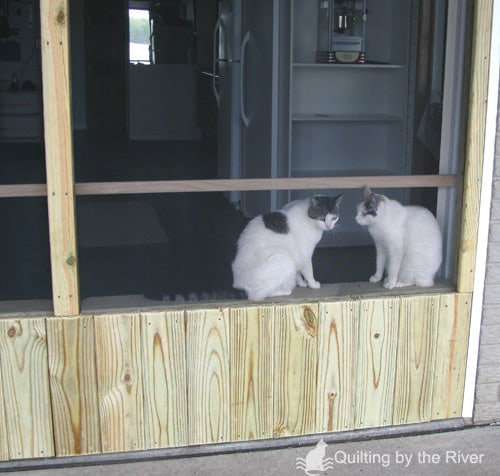 Cats looking out their new screened garage door