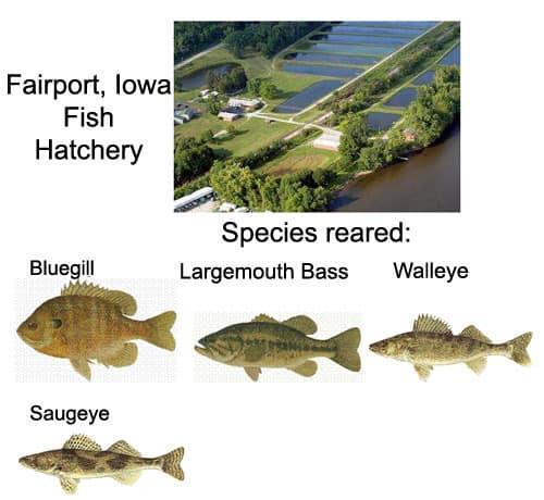 Fairport iowa fish hatchery on the mississippi river for Iowa fish hatcheries