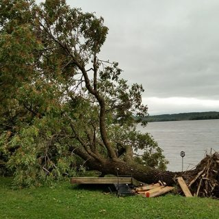 Fallen tree along the Mississippi river