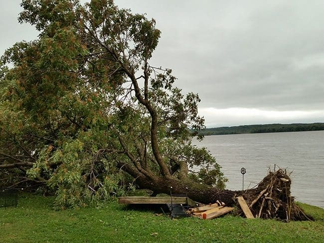 Tornado uproots tree in front of our house