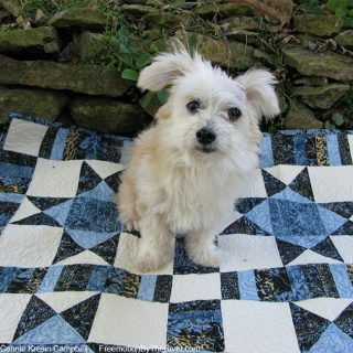 Cute little dog sitting on quilt