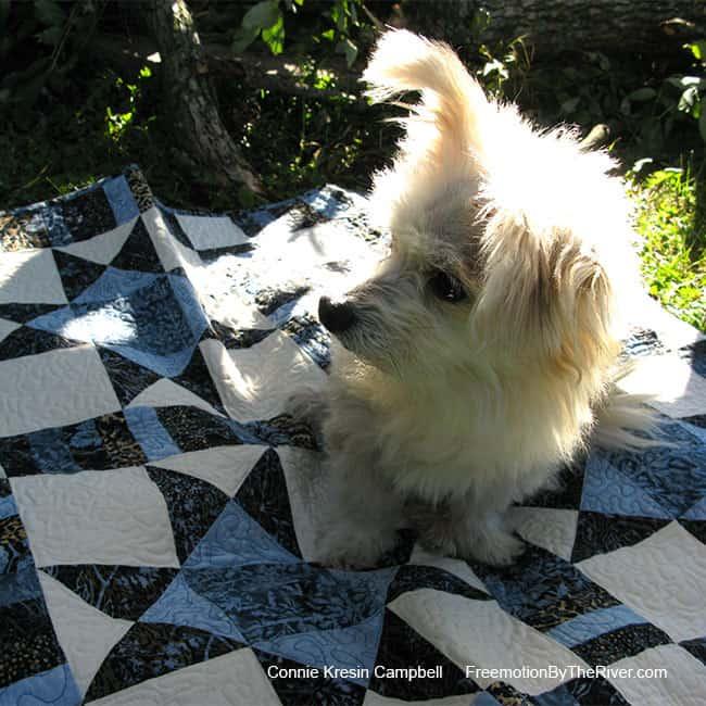 Sadie in the sun