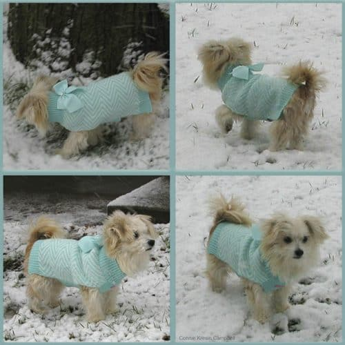 Sadie first snow in a new dog sweater
