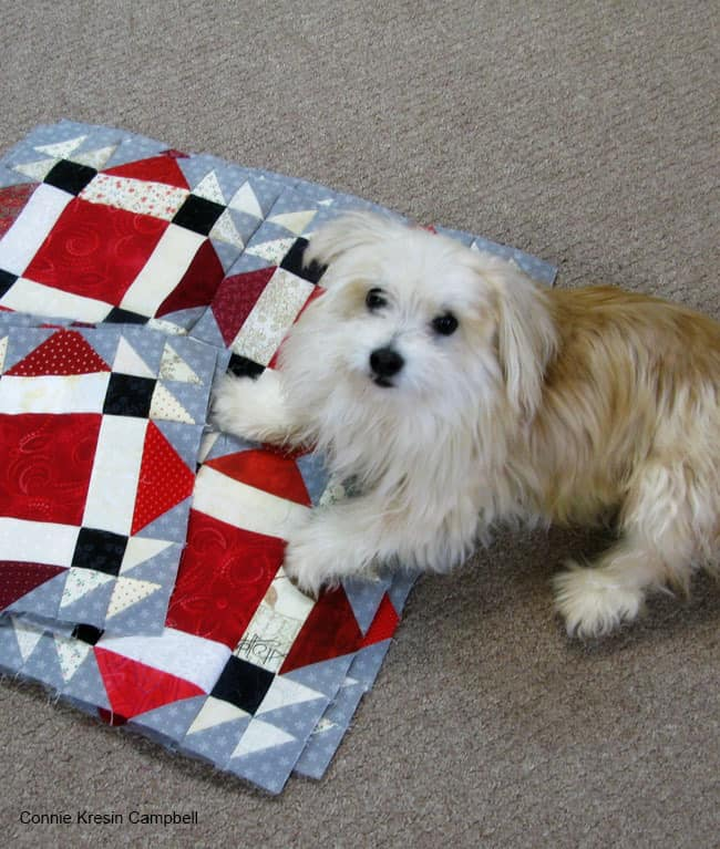 Dog on quilt
