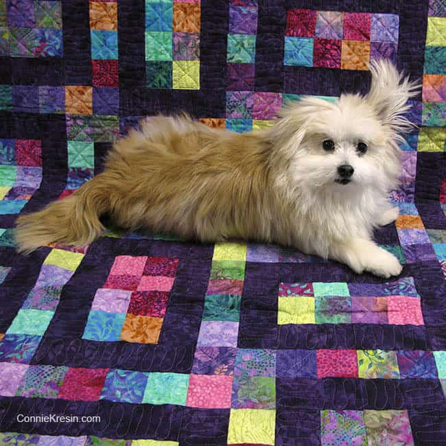 Sadie on the Hopscotch quilt pattern available