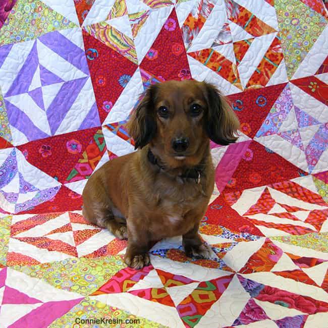 Tasha on the Spellbound quilt