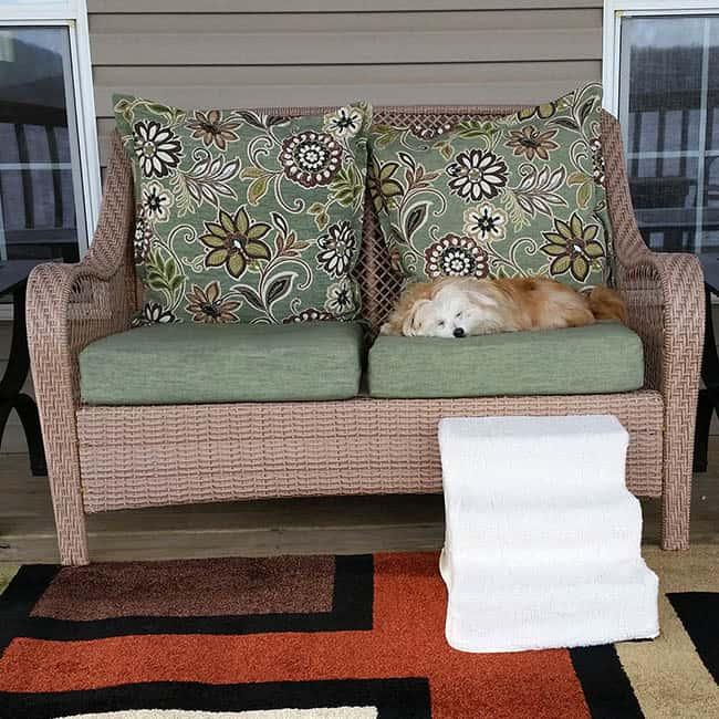 Deck with sleeping sadie
